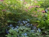 dicentra and brunnera