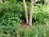river birch, itea virginica, fothergilla, christmas fern